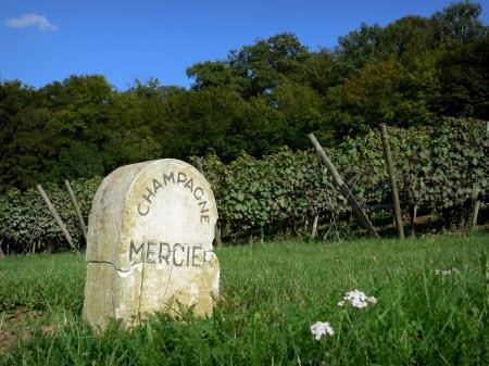 Francia tierra de vinos